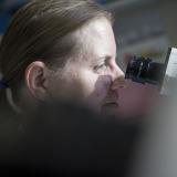 Forschung Onkologie