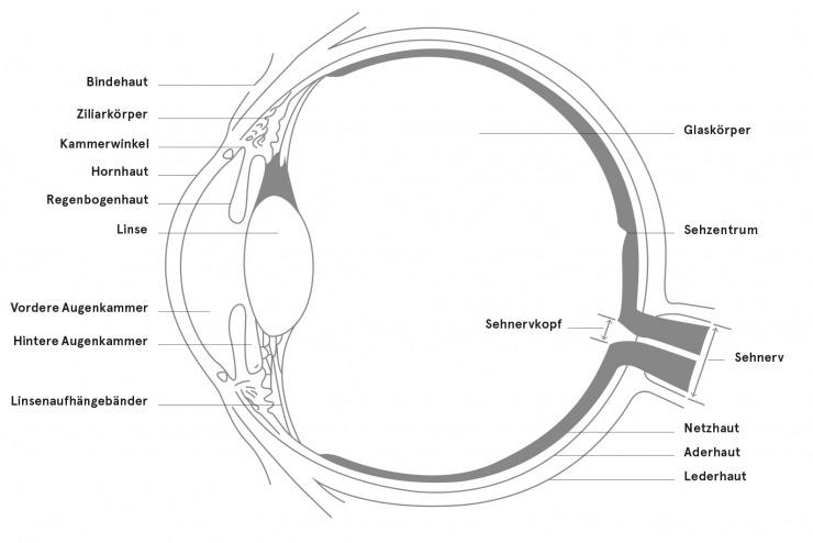 Anatomie des Auges | Kantonsspital St.Gallen